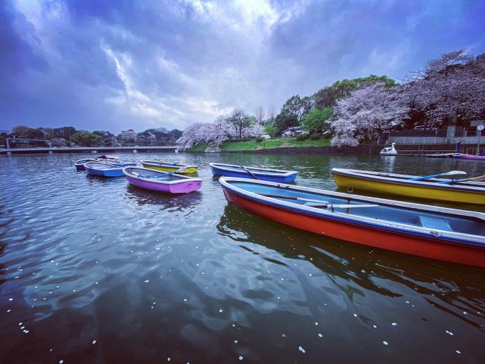 千代田区北の丸公園 / iPhone 11_c0334533_16165446.jpg