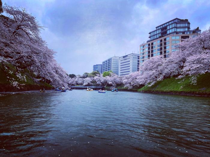 千代田区北の丸公園 / iPhone 11_c0334533_16172659.jpg