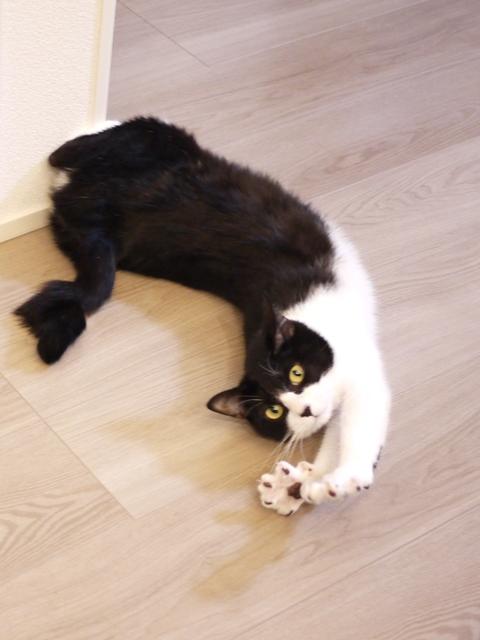猫のお留守番 うりちゃん編。 - ゆきねこ猫家族