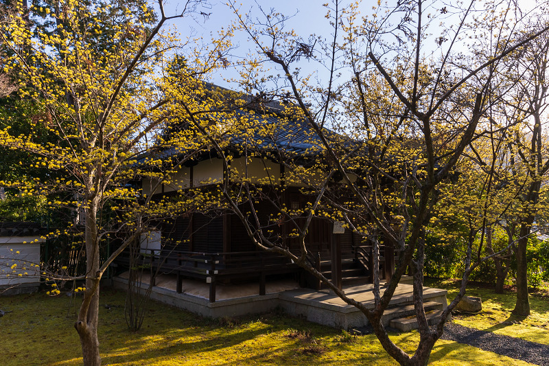 初春の花咲く真如堂_f0155048_20442530.jpg