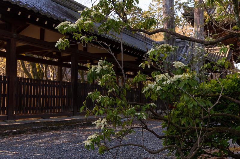 初春の花咲く真如堂_f0155048_20461180.jpg
