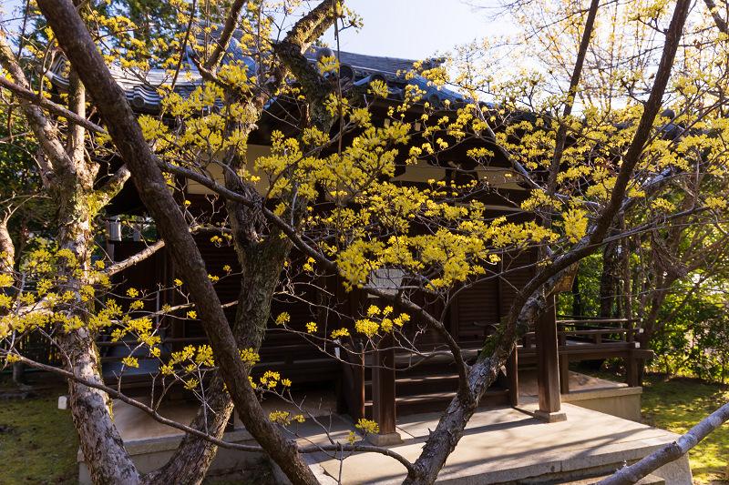 初春の花咲く真如堂_f0155048_20480483.jpg