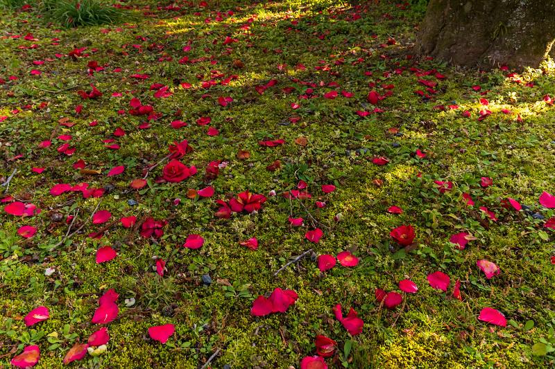 初春の花咲く真如堂_f0155048_20482572.jpg