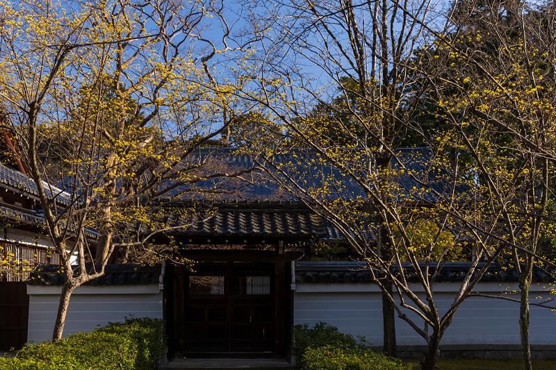 初春の花咲く真如堂_f0155048_20495909.jpg
