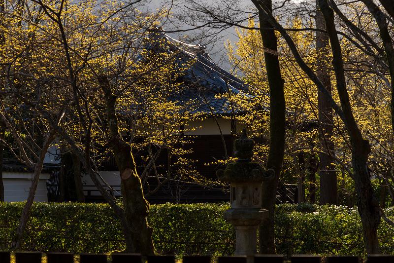 初春の花咲く真如堂_f0155048_20501184.jpg