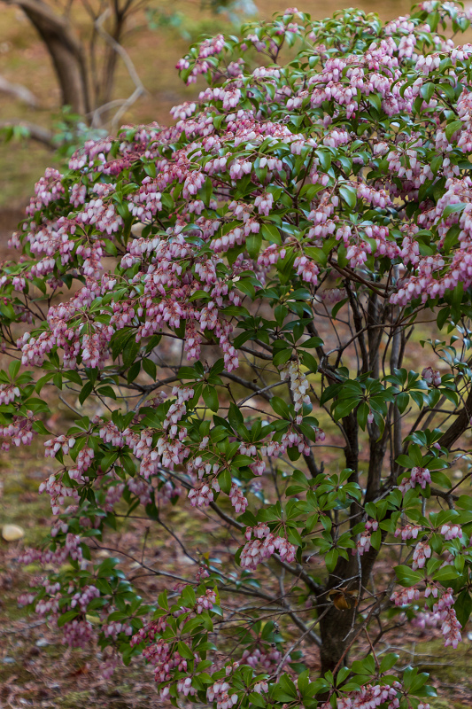 初春の花咲く真如堂_f0155048_20501435.jpg