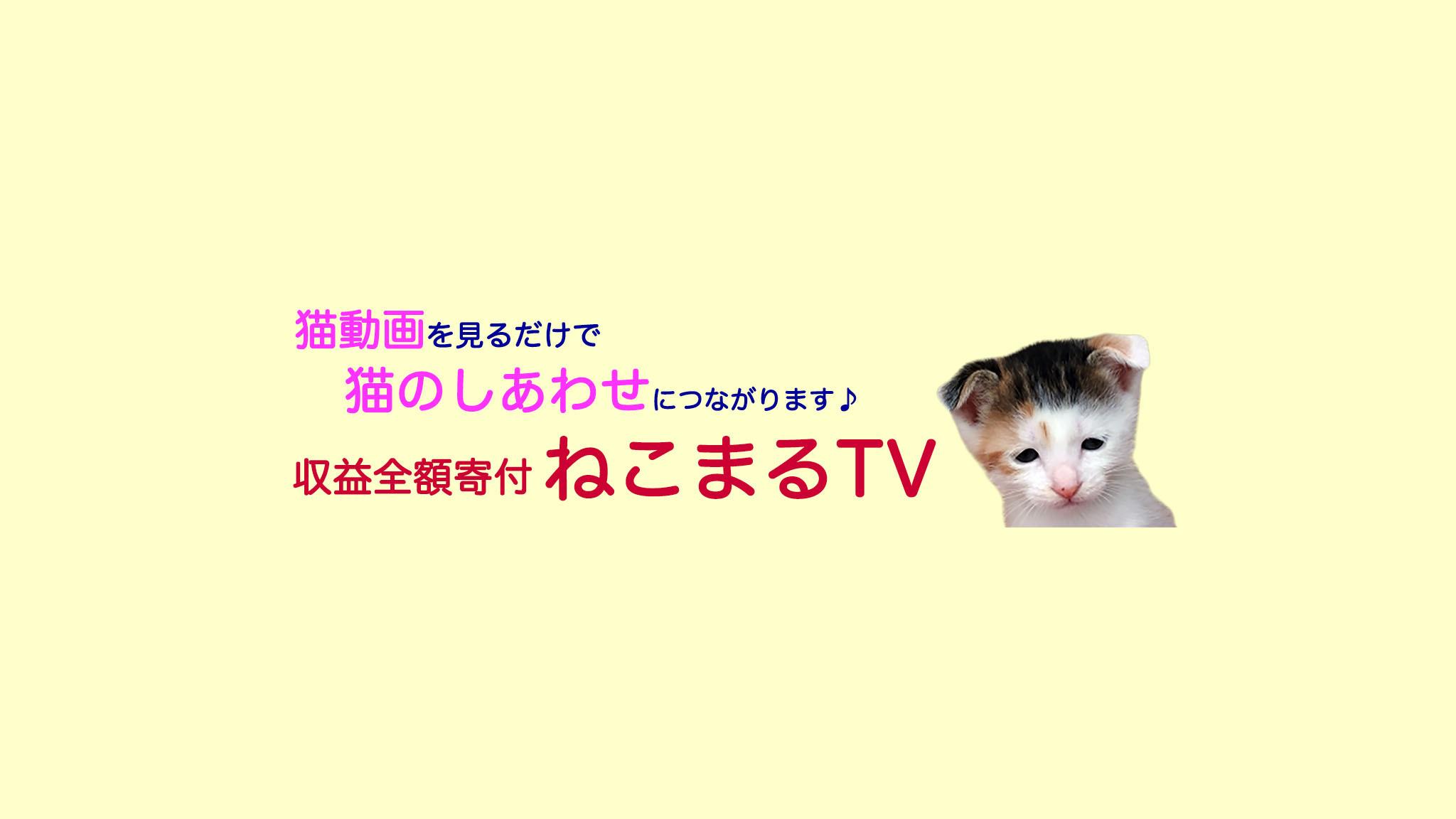 工事現場で頭を潰されてしまった猫、ぴいこちゃんを今後も支えていきます!_a0246661_20254835.jpg