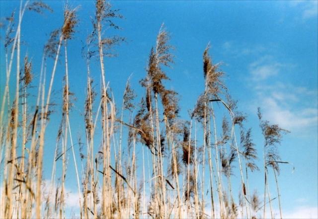 コロナ渦の公園、冬 1_c0082066_15433682.jpg