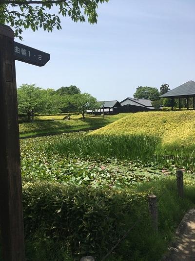 5月5日 難波田城公園_c0122967_10140320.jpg