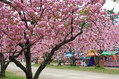 弘前公園桜_2021.05.05撮影_d0131668_15081121.jpg