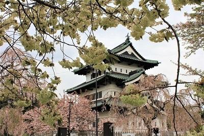 弘前公園桜_2021.05.05撮影_d0131668_15124786.jpg