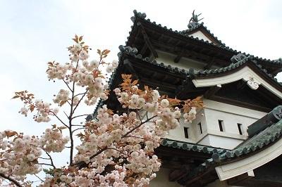 弘前公園桜_2021.05.05撮影_d0131668_15133498.jpg