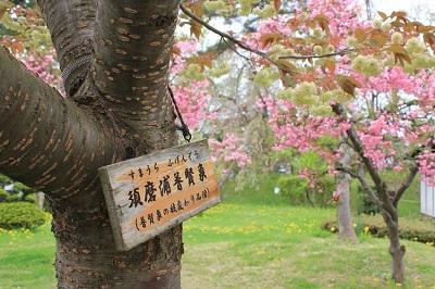 弘前公園桜_2021.05.05撮影_d0131668_15145848.jpg