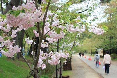 弘前公園桜_2021.05.05撮影_d0131668_15222487.jpg
