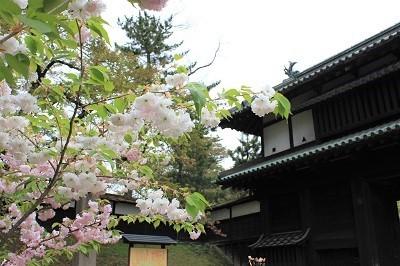 弘前公園桜_2021.05.05撮影_d0131668_15254587.jpg