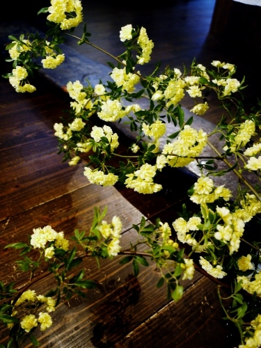 お花いっぱい♪ 美味しいもんいっぱい♪_e0167795_17305990.jpg