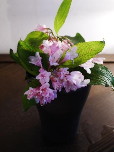 お花いっぱい♪ 美味しいもんいっぱい♪_e0167795_17324445.jpg