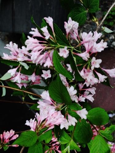 お花いっぱい♪ 美味しいもんいっぱい♪_e0167795_17325453.jpg