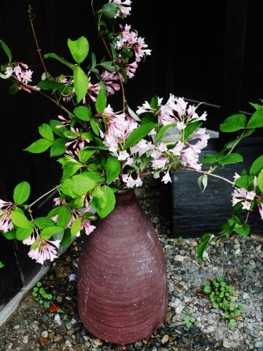 お花いっぱい♪ 美味しいもんいっぱい♪_e0167795_17330641.jpg