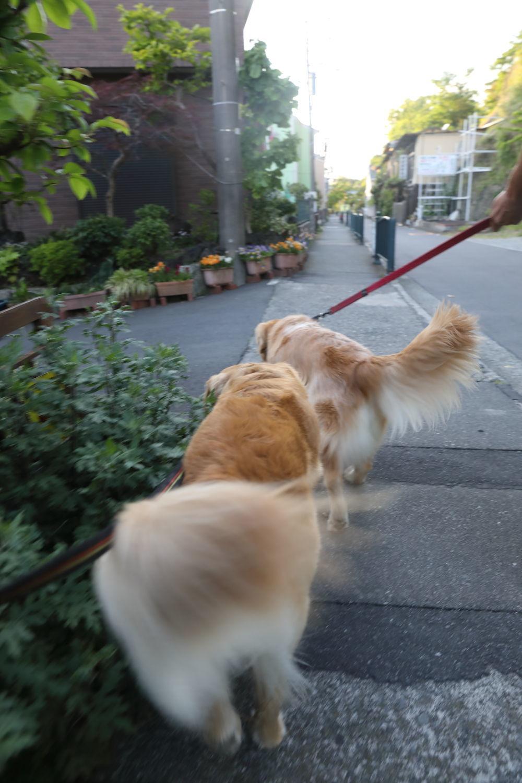奇襲攻撃♪ - ハナ&ララとお散歩!