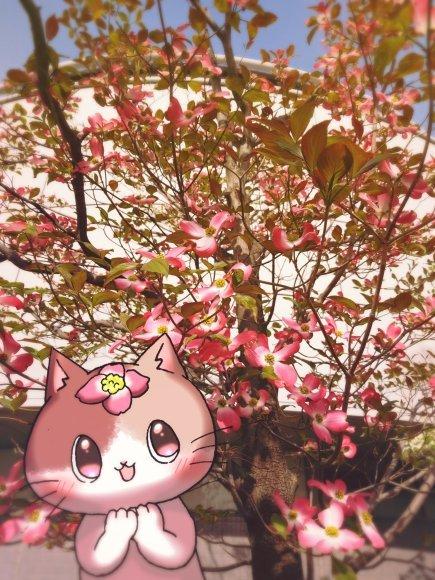 Twitter写真絵日記まとめ⑨_a0201203_15101306.jpg