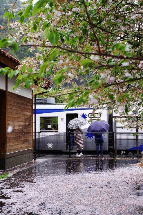 散りゆく雨の中_d0309612_22591420.jpg