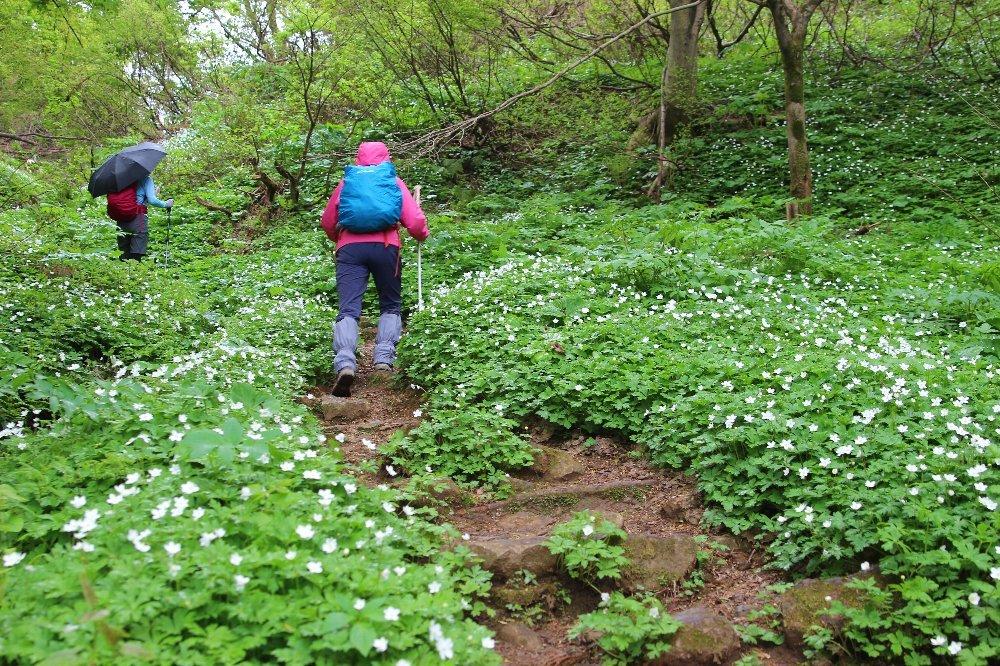 八石山は花盛山_a0309917_13212466.jpg