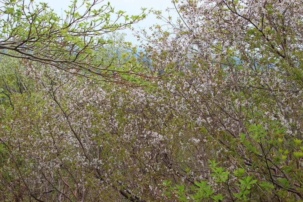 八石山は花盛山_a0309917_13344688.jpg