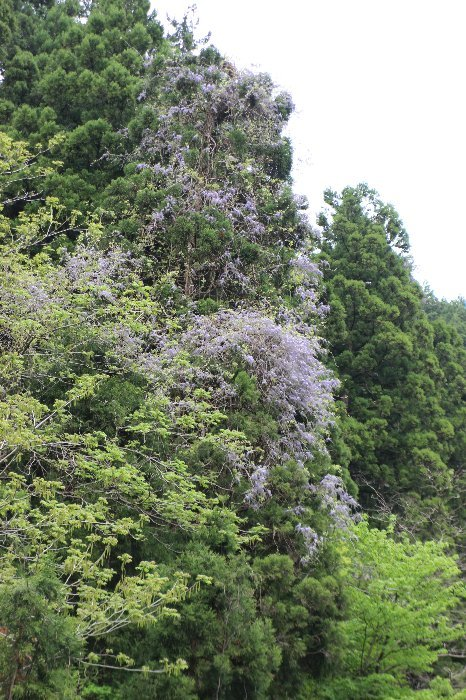 八石山は花盛山_a0309917_13482610.jpg