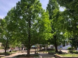 新緑の公園が気持ちいい_b0040332_18362001.jpg