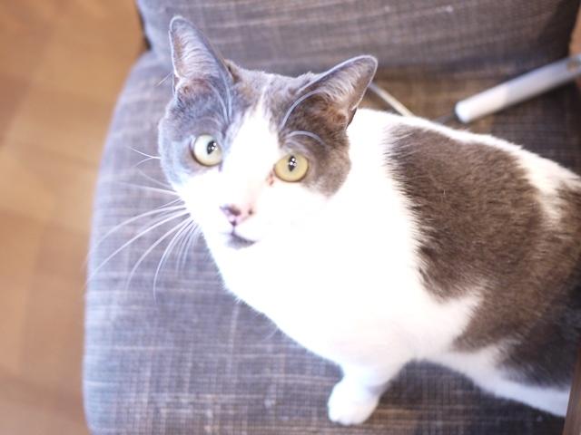 猫のお留守番 ルナくん編。_a0143140_23095009.jpg
