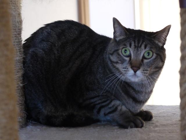 猫のお留守番 ソルくん編。_a0143140_23152350.jpg