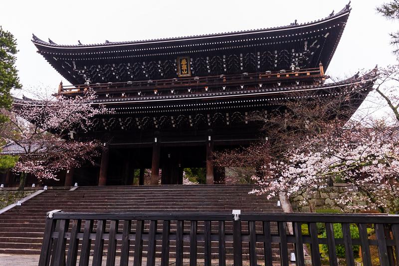 2021桜咲く京都 雨の知恩院・友禅苑にて_f0155048_23395033.jpg
