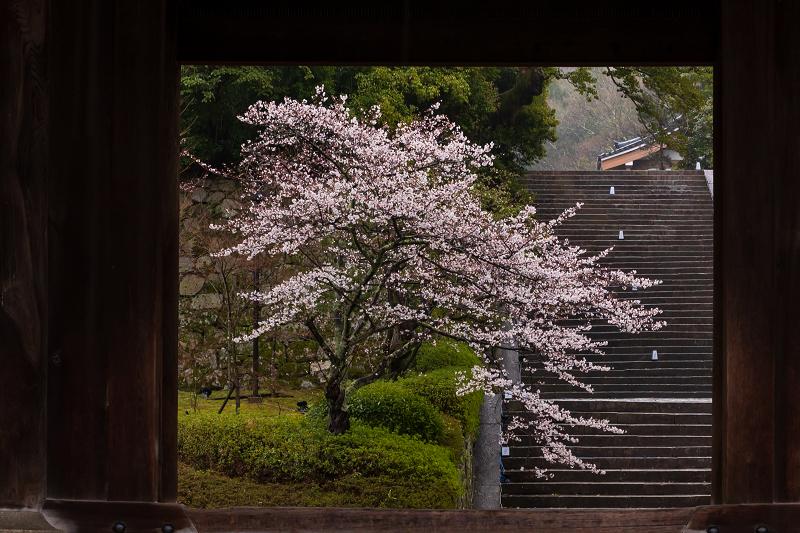 2021桜咲く京都 雨の知恩院・友禅苑にて_f0155048_23395500.jpg