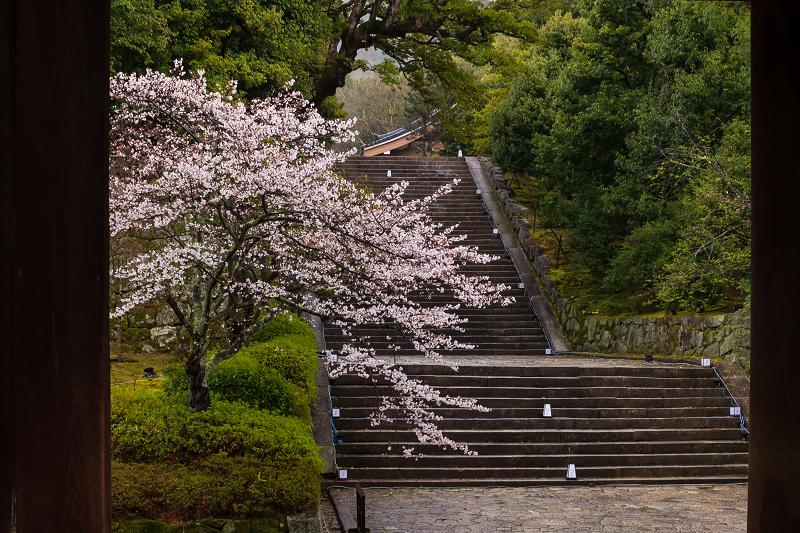 2021桜咲く京都 雨の知恩院・友禅苑にて_f0155048_23401107.jpg