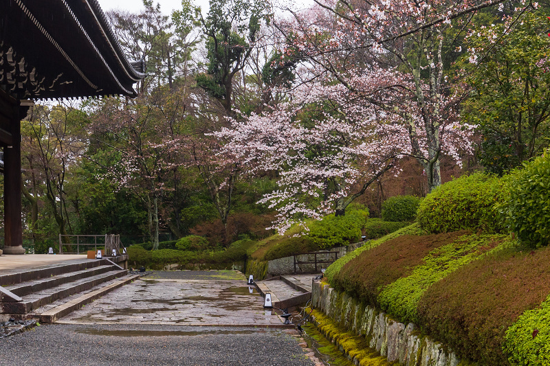 2021桜咲く京都 雨の知恩院・友禅苑にて_f0155048_23412808.jpg