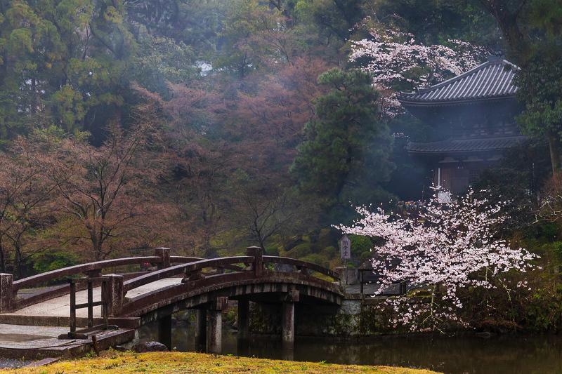 2021桜咲く京都 雨の知恩院・友禅苑にて_f0155048_23422454.jpg