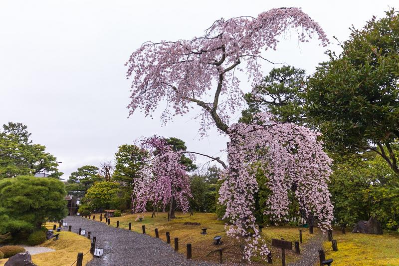 2021桜咲く京都 雨の知恩院・友禅苑にて_f0155048_23424237.jpg
