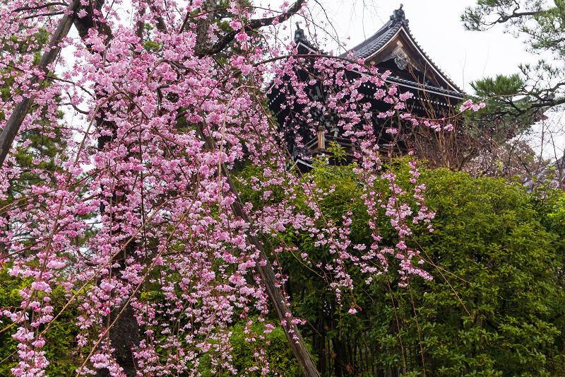 2021桜咲く京都 雨の知恩院・友禅苑にて_f0155048_23444264.jpg