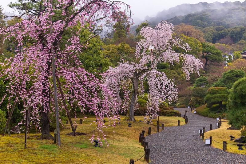 2021桜咲く京都 雨の知恩院・友禅苑にて_f0155048_23452596.jpg