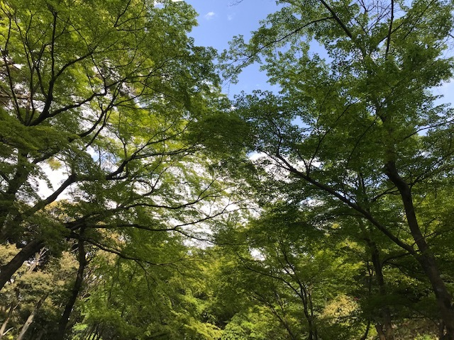 西陣コネクト・三井寺で開催中の谷口智則展へ。_f0181251_19362224.jpg