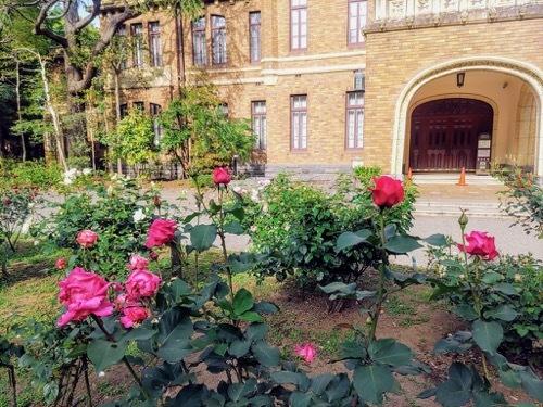 2021年・開花情報・駒場公園_a0094959_20114044.jpg
