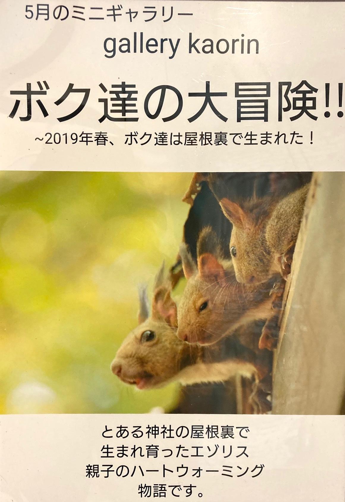 5月のミニギャラリーは gallery kaorin さんです_c0227664_16253273.jpg