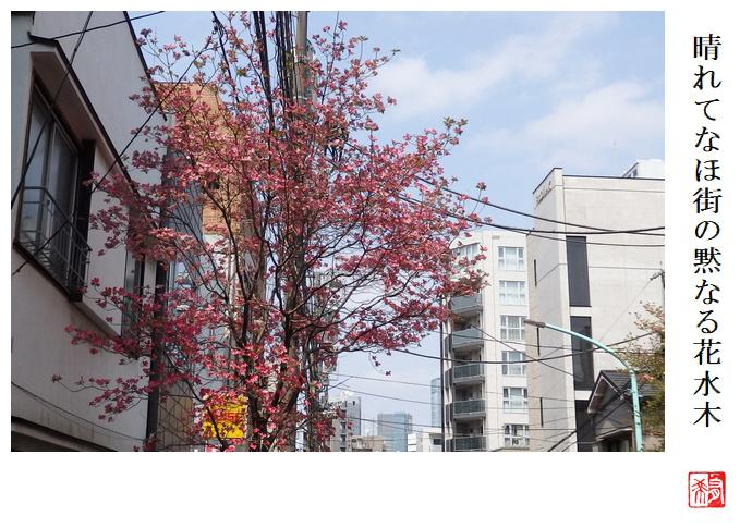 晴れてなほ街の黙なる花水木_a0248481_23415223.jpg