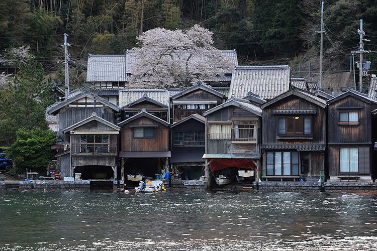 舟屋に咲く一本桜_e0051888_22215669.jpg