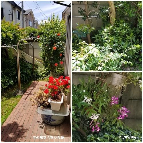 母の日、庭の花、ワクチン予約、N叔母_c0051105_15384974.jpg