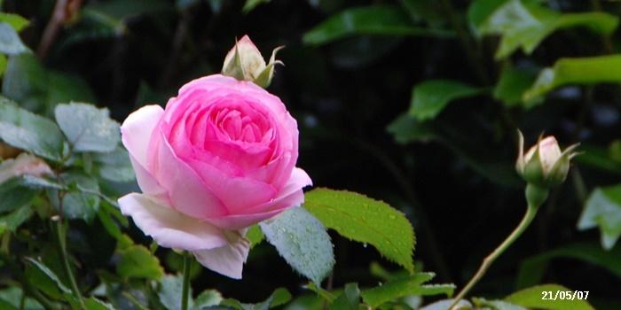 母の日、庭の花、ワクチン予約、N叔母_c0051105_15475316.jpg