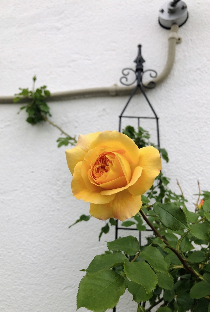 noanoa garden_f0039406_17010110.png