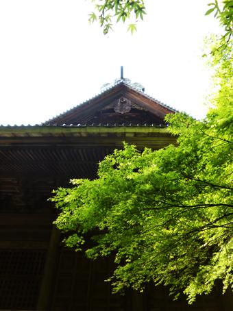 鎌倉の妙本寺に行きました。_c0195909_11190482.jpg