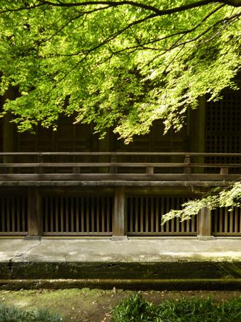 鎌倉の妙本寺に行きました。_c0195909_11190910.jpg